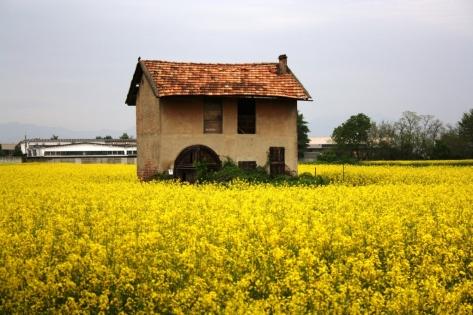 archeologia agricola - Mariani Angela