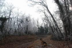 Guardiano del sentiero - Virginio Provenzi