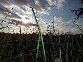 tra cielo e terra .campi a Pozzo - Vincenza Porretta