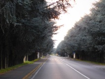 Viale Alberato - raffaele arrigoni