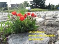 Cinzia Bracco - entrata alla cittadella del pensiero