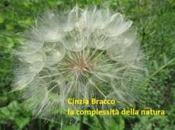 Cinzia Bracco - la complessità della natura