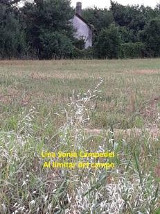 Lina Sonia Campedel - Al limitar del campo