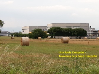 Lina Sonia Campedel - Tavolozza ocra dopo il raccolto